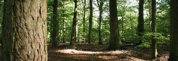 1993: Cras werkt mee aan duurzaam bosbeheer